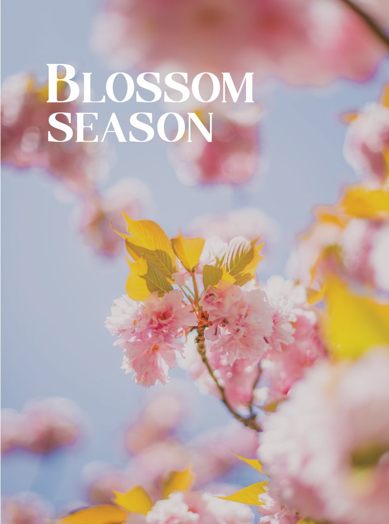 blossom season header